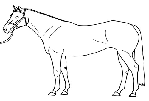 horse-sprinter001-crop-traced